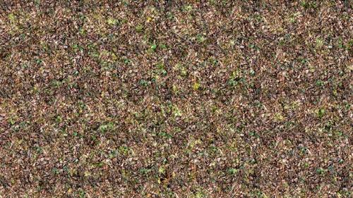 4_forests_grass_stereogram_.jpg